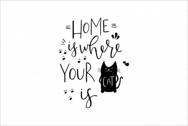 ByHome J53_Cat faltetoválás