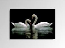 Digital Art vászonkép | 1222-S Swans ONE