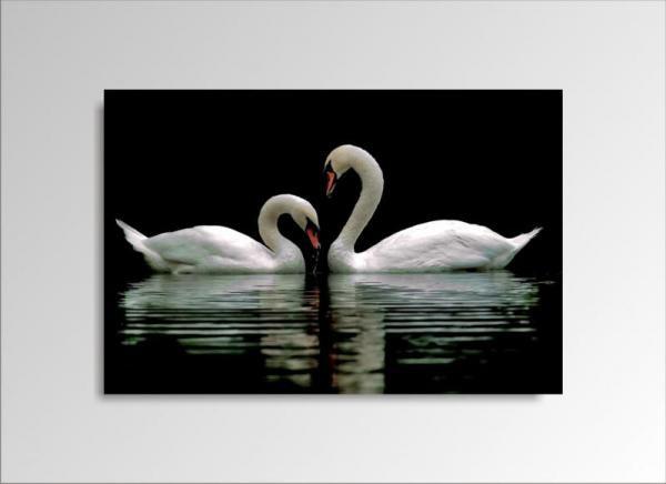 Digital Art vászonkép | 1222-S Swans ONE