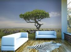 Fotótapéta - - Afrika zebrák az árnyékban egy fa