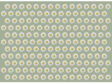 Fotótapéta -  Dancing daisies