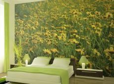Fotótapéta - A réten sárga virágok