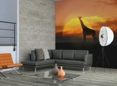 Fotótapéta - A zsiráf alkonyatkor
