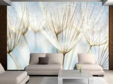 Fotótapéta - Abstract dandelion flower background