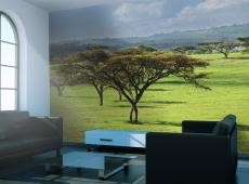 Fotótapéta - Afrikai fa