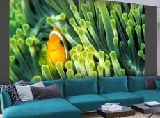 Fotótapéta - Anemonefish