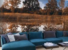 Fotótapéta - Autumn Reeds