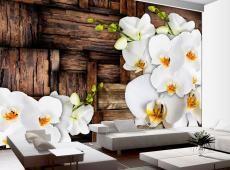 Fotótapéta - Blooming orchids