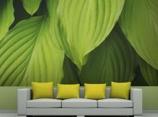 Fotótapéta - Bright green leaves