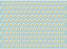 Fotótapéta - Dancing daisies II