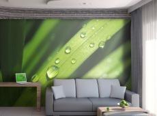 Fotótapéta - Dewdrops on leaves