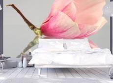 Fotótapéta - Egy magányos magnólia virág