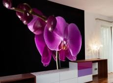 Fotótapéta - elegant  orchis
