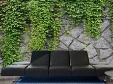 Fotótapéta - Green wall