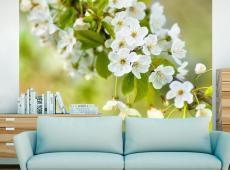 Fotótapéta - Gyönyörű finom cseresznye virágok
