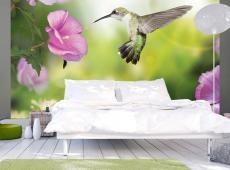 Fotótapéta - Humming-bird