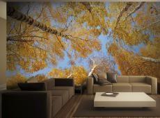 Fotótapéta - Őszi fák
