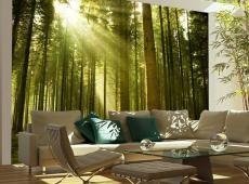 Fotótapéta - Pine erdő