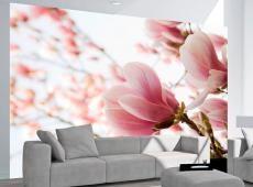 Fotótapéta - Pink magnólia