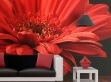 Fotótapéta - Piros gerbera virág