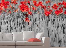 Fotótapéta - Piros pipacsok a fekete-fehér háttér