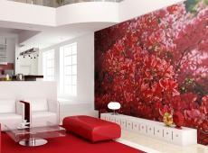Fotótapéta - Rhododendron, Japanische azalea