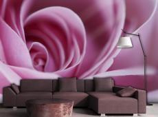 Fotótapéta - Rózsaszín rózsa