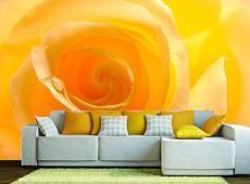 Fotótapéta - Sárga rózsa