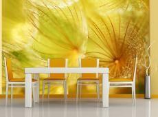 Fotótapéta - Soft pitypang virág