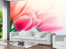 Fotótapéta - Spring and tulips