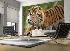 Fotótapéta - Szumátrai tigris