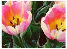 Fotótapéta - tulips - duo