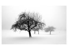 Fotótapéta - winter - trees