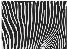 Fotótapéta - Zebra pattern (black and white)