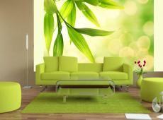 Fotótapéta - Zöld bambusz levelek