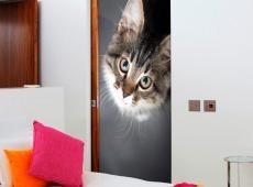 Fotótapéta ajtóra - Charming Kitten