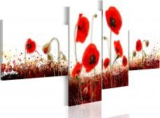 Kép - A field of poppies on a white background