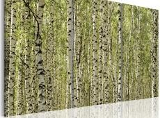 Kép - A forest of birch trees
