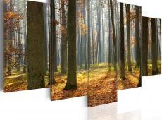 Kép - A nice forest landscape