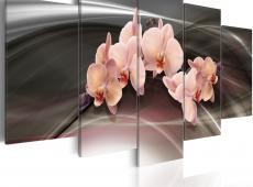 Kép - A pink orchid on a dark background