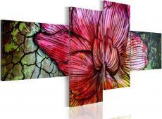 Kép - A rainbow-hued flower