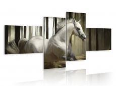 Kép - A speedy horse