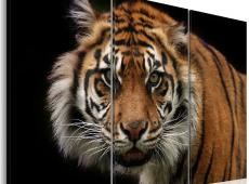 Kép - A wild tiger