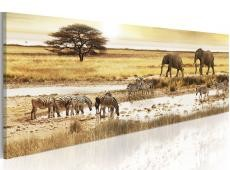 Kép - Africa: at the waterhole
