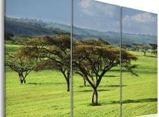 Kép - African acacias