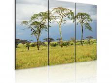 Kép - African flora