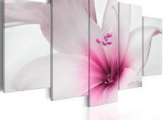Kép - Amarylis: Pink Charm