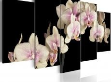 Kép - An orchid on a contrasting background