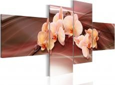 Kép - An orchid on a subdued background