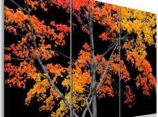 Kép - Autumn reflection